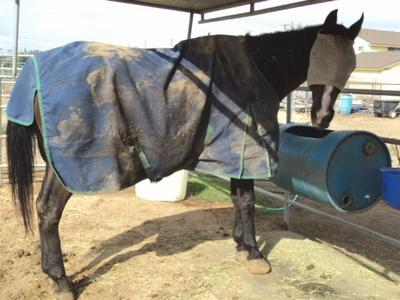 New paris indiana horse blanket washing